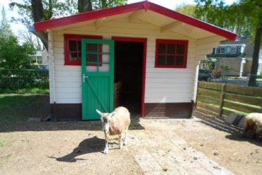 Onze nieuwe stal vanwege Q-koorts