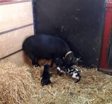 Nieuwe geboortes